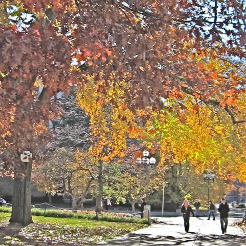 Diag in fall