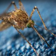 mosquito biting through fabric, Photo by Егор Камелев on Unsplash